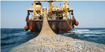 Hình 1: Con tàu cá lưới rà / trawler Trung Quốc có khả năng vét nạo tới đáy đại dương: những chiếc tàu khủng ấy đang đánh cá lậu ngoài khơi các xứ Tây Phi châu và các nơi khác; một lối đánh cá lùng và diệt nguồn tài nguyên của hành tinh này. [nguồn: India Live Today, July 8, 2016]