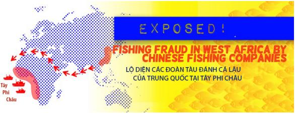 Hình 2: Số hạm đội tàu cá Trung Quốc ngày càng gia tăng, tăng mức đánh trộm cá ngày đêm suốt dọc vùng biển Tây Phi châu [nguồn: Greenpeace Africa 20.05.2015]