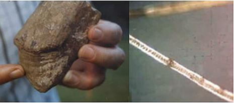 Trái: gạc hươu hóa thạch. Phải: một chùm lông mèo.